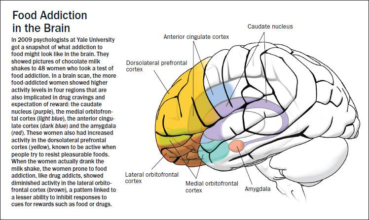 brain-food-addiction